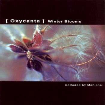 Oxycanta Winter Blooms